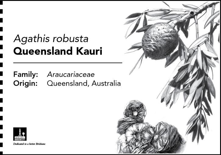 00352_kpwt_botanical_b5_plaques_fa11